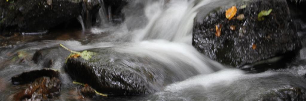 WATER, 2018-10-01, Morvan, Le Chatelet, beek in bos-2 - kopie