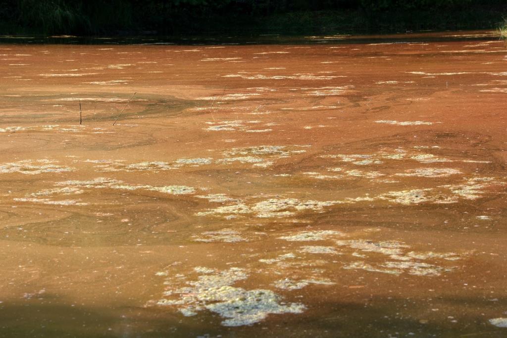 SCH, 2019-08-27, Kristalmeer met rode en groene algen-4 - kopie